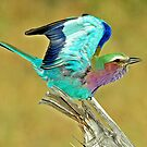 Lilac-Breasted-Roller - Botswana by Marieseyes