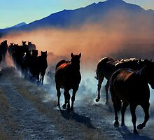 Leading Them Home  by Jeanne  Nations