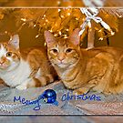 Meowy Christmas by Maria Dryfhout