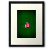 the lonely rose Framed Print