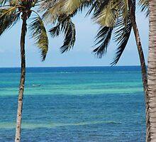Palm trees at Shelley Beach, Kenya by Susan Harley