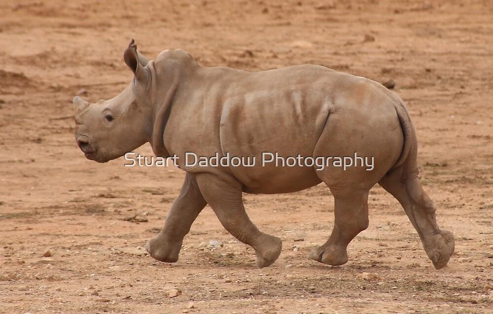 Run Baby Rhino Run by Stuart Daddow Photography