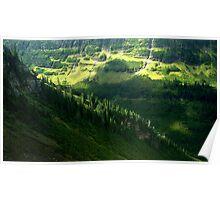 Glacier Park Treeline Poster