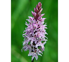 Common Orchid in Kent Photographic Print