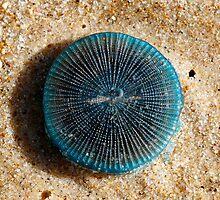 Blue Buttons (Porpita porpita) by Normf