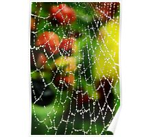 Spider Webs and Blackberries Poster