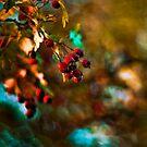 painted by the autumn by Patrycja Makowska