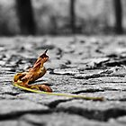 Leaf me alone by Delfino