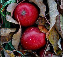 Frosty Apples by Nancy Barrett