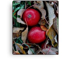 Frosty Apples Canvas Print