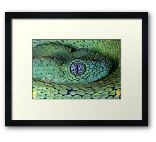 Bush viper Framed Print