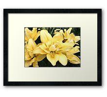 Cheerful Lilies Framed Print