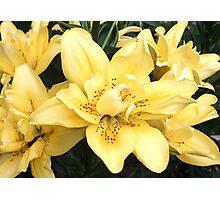 Cheerful Lilies Photographic Print