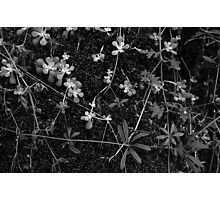 Stonecrop and Bedstraw Photographic Print