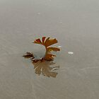 seaweed comb by beanocartoonist