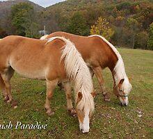 Amish Paradise by JpPhotos