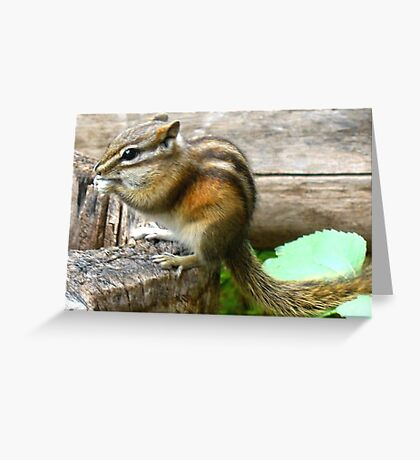 Quick Snack Greeting Card