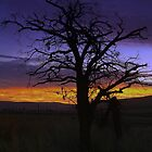 Early Dawn in the Country by angellynnhill