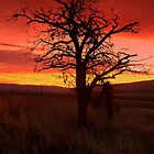 Burning Sunrise by angellynnhill