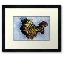 Frosty Undergrowth Framed Print