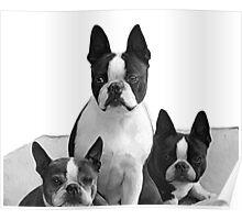 sitting pretty (black & white) Poster