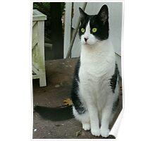 A Feline Portrait Poster