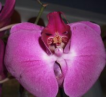 Orchid face by Ravred