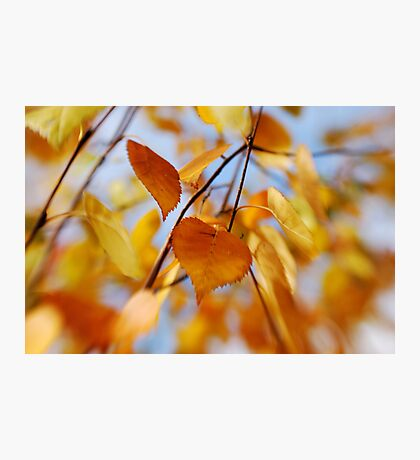 Lensbaby of fall leaves Photographic Print