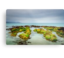 Seaweed Rocks, Bicheno Metal Print