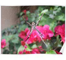 St Andrews Cross Spider Poster