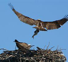 Osprey Nest by byronbackyard