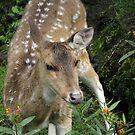 Rainforest Deer by Ellen Cotton