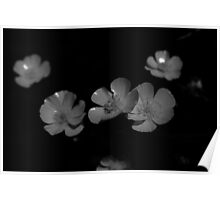 Yellow Wildflower in Black and White Poster