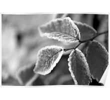 Frosty Leaves in Black and White Poster