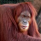 Orang Utan Gabby by Tom Newman