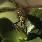 my gorgeous friend - dragon-fly by Edyta Magdalena Pelc