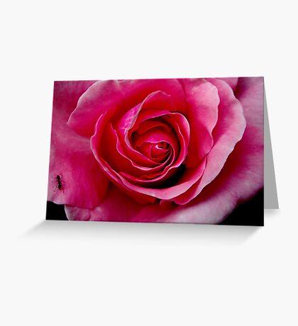 Pink Rose & Ant Greeting Card