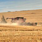 Harvest by GailD