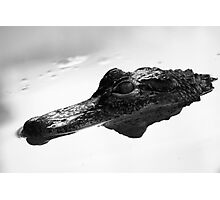 Crocodilian Photographic Print