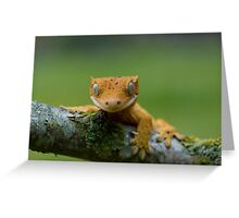 Young crested gecko Greeting Card