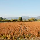 Soya Bean Field in Autumn  by jojobob