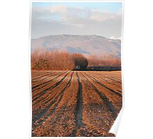 Field During Winter, Friuli  Poster