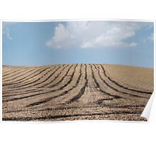 Striped Field, Puglia  Poster