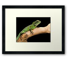 Water dragon on a log Framed Print