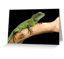 Water dragon on a log Greeting Card