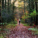Beautyful forest by ienemien
