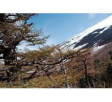Mount Fuji Slope  Photographic Print