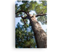 Red Tingle Tree Metal Print