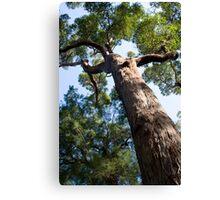 Red Tingle Tree Canvas Print