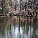 Evergreen Reflections by rasnidreamer